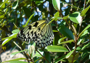 insect butterfly blog image