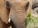 animal, ivory, tusk